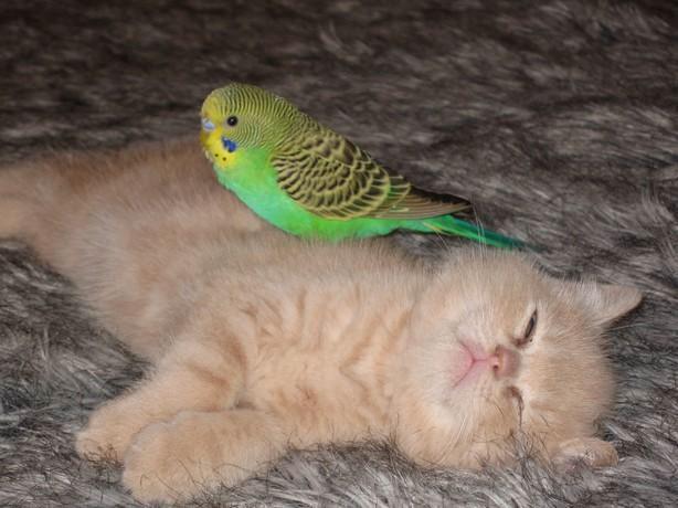 gato_y_perico